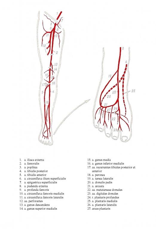 Схемы кровообращения